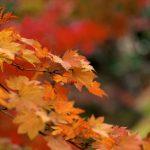 紅葉の写真-2